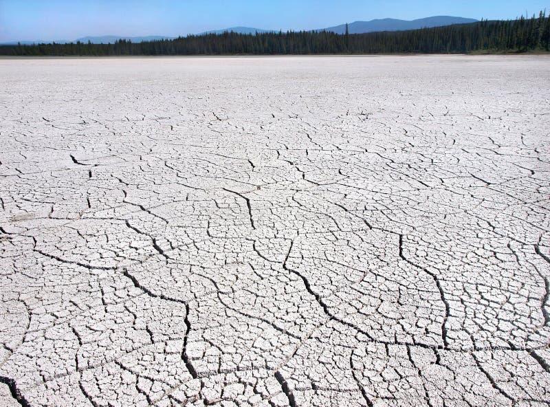 Terra incrinata dovuto la siccità nella regione selvaggia della Columbia Britannica, Canada fotografia stock libera da diritti
