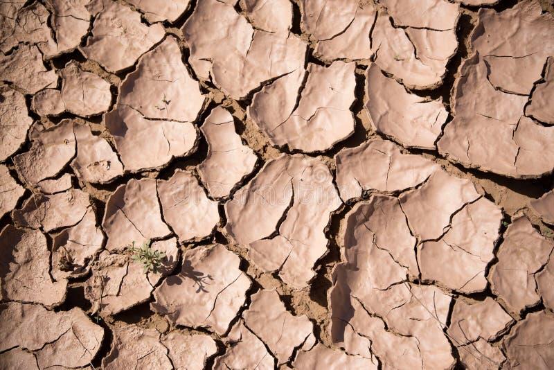 Terra incrinata nel deserto immagine stock