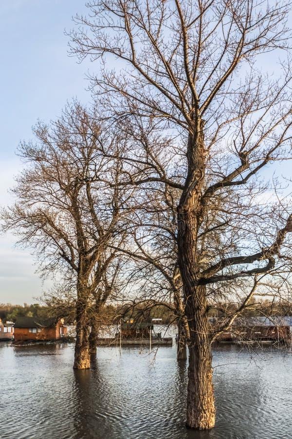 Terra inundada com as casas de flutuação em Sava River - Belgrado nova - imagens de stock royalty free