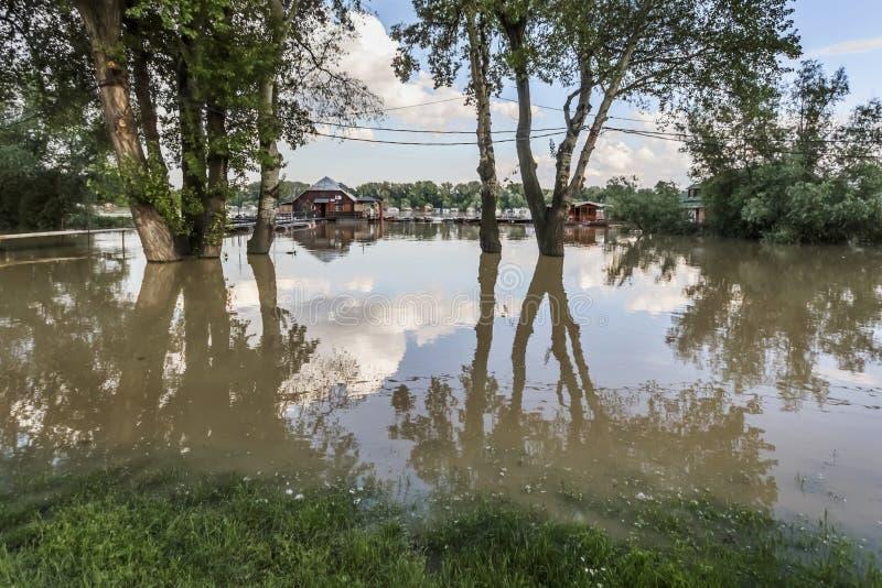 Terra inundada com as casas de flutuação em Sava River - Belgrado nova - fotografia de stock royalty free