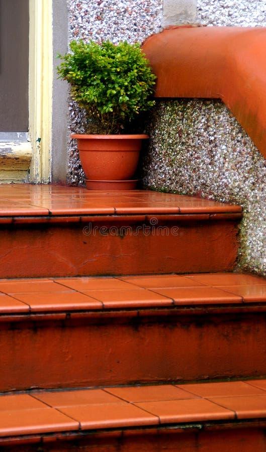 Terra molhado - etapas da telha do cotta fotos de stock