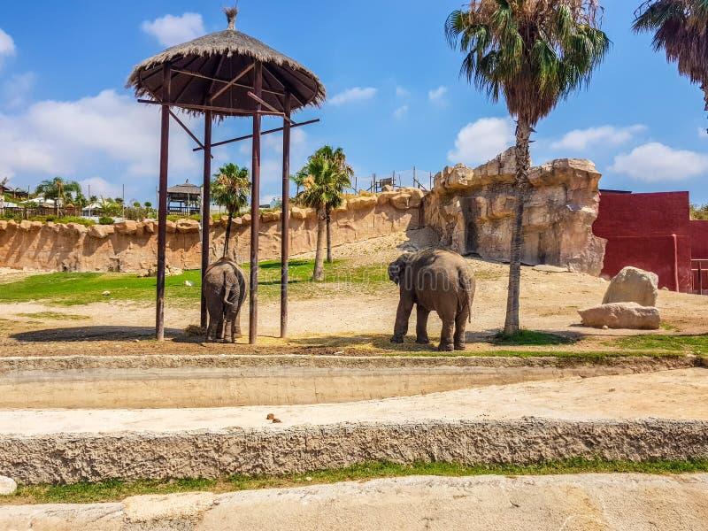 Terra Natura, Benidorm, Spain; August 15, 2019: Elephants in their recreation area. Natural nature travel desert animal holy sky gold dome tourism wildlife zoo stock photos