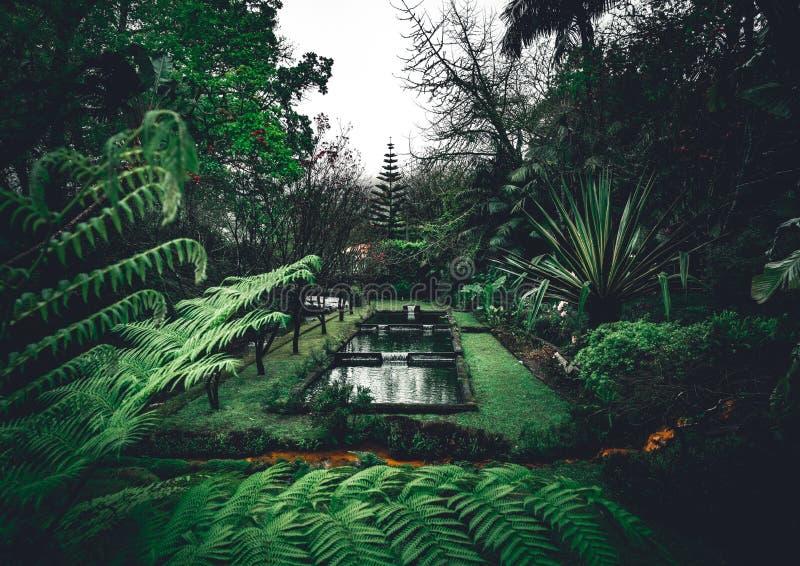 Terra Nostra Garden Park op het eiland van Saomiguel, Furnas, de Azoren Het wordt gevestigd in het midden van dit prachtige water stock afbeeldingen