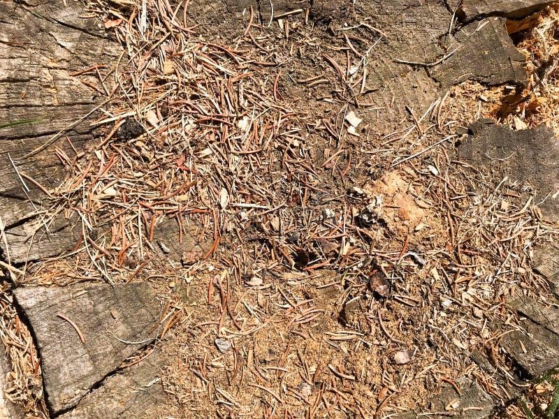 A terra, os cones do pinho marrom do abeto vermelho e os moldes de carcaça naturais e copiam o lugar na floresta conífera contra  fotos de stock royalty free