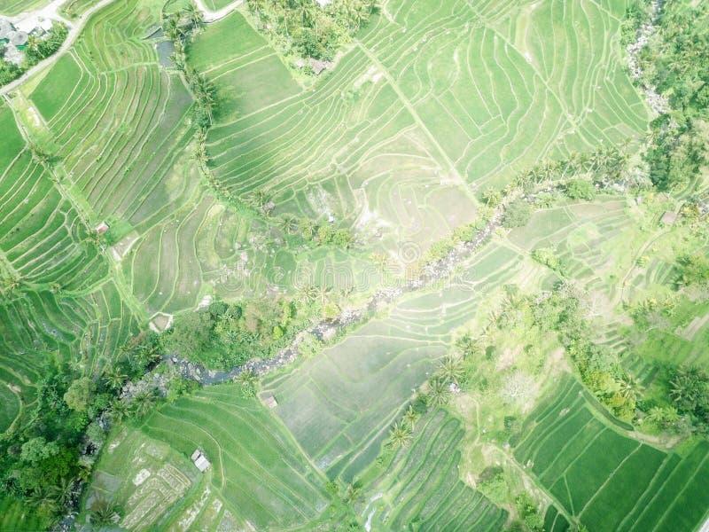 Terra?os do arroz de Jatiluwih nas montanhas da ilha de Bali em Indon?sia imagem de stock