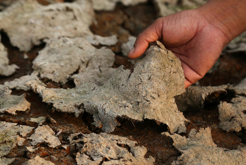 Terra rachada devido à seca fotos de stock