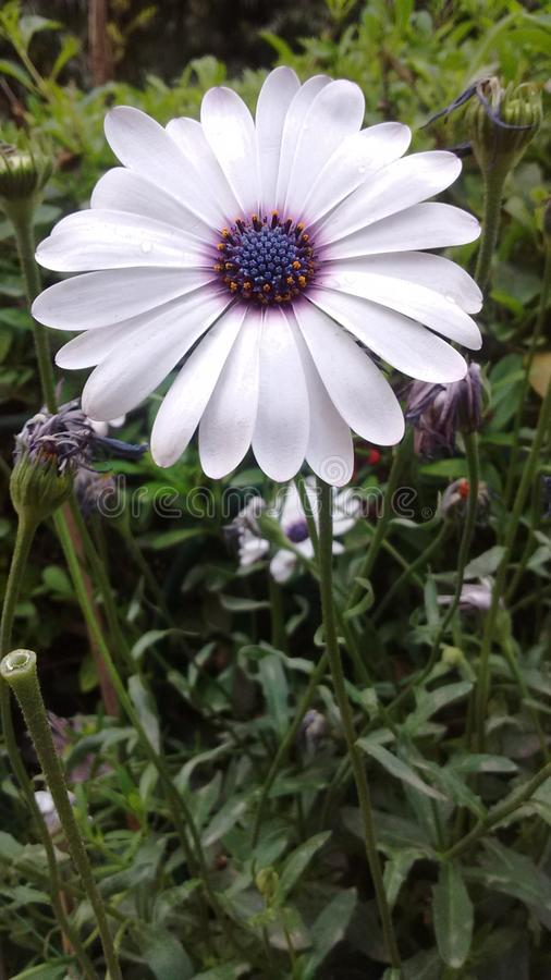 A terra ri nas flores imagem de stock