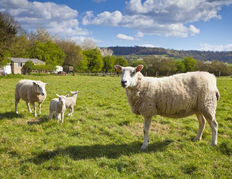 Terra rural idílico, Cotswolds Reino Unido foto de stock