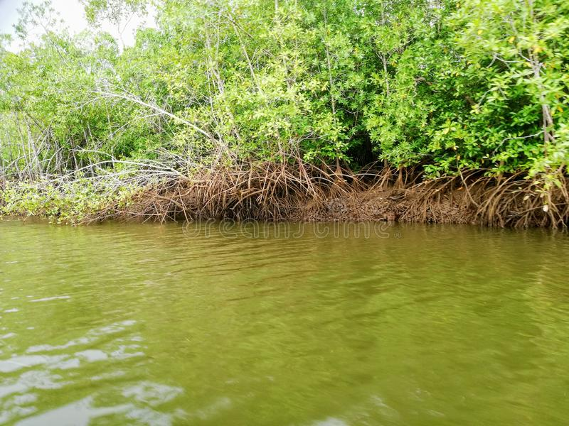 Terraba Sierpe national wetlands. Costa Rica royalty free stock photo