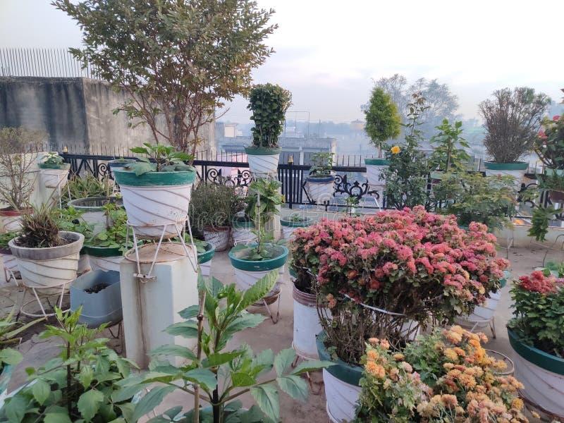 Terrace índio Jardim imagem de stock royalty free