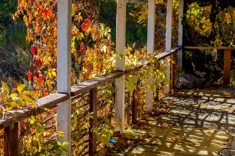 Terrace abandoned house overgrown with girlish grapes royalty free stock photos