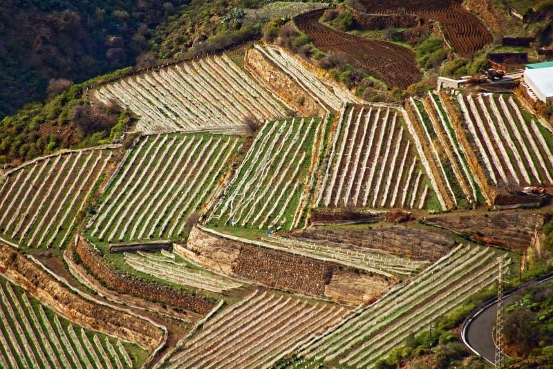 Terrace Farming royalty free stock photos