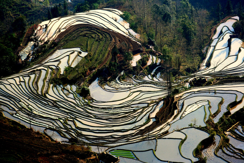 Terrace field distortion. Local plantation of the rice terrace in yuanyang, yunnan,china royalty free stock images