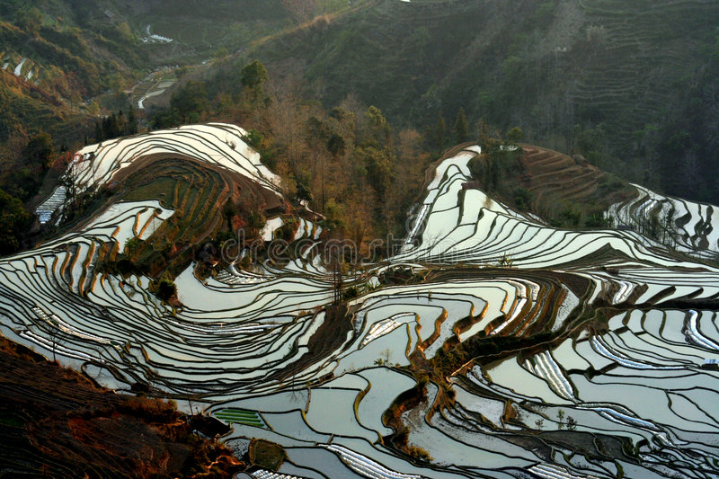 Terrace field distortion. Local plantation of the rice terrace in yuanyang, yunnan,china stock image