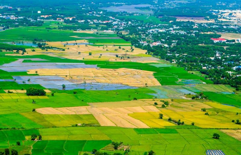 Terrace field rice on the harvest season Baria province, vietnam royalty free stock image