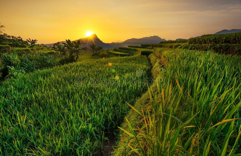Terrace. Field and sunrise stock image