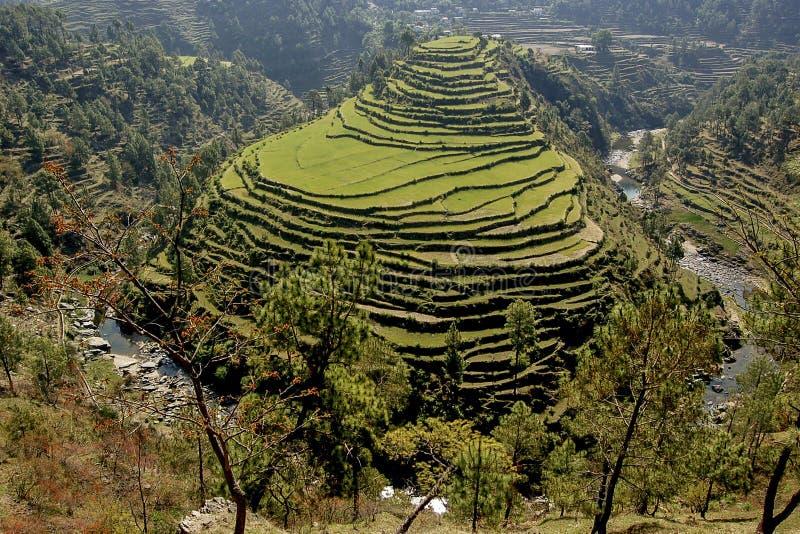 Terrace fields at Almora, Uttarakhand, India stock images