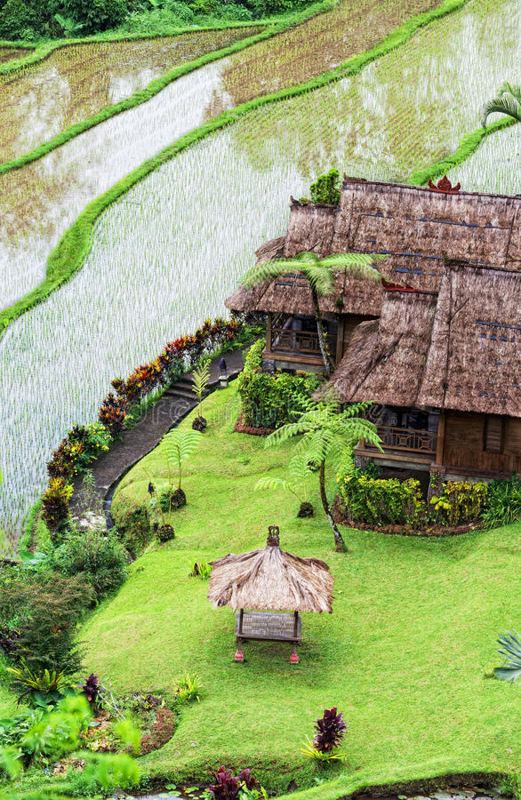 Download Terrace Rice Fields Royalty Free Stock Images - Image: 24521169