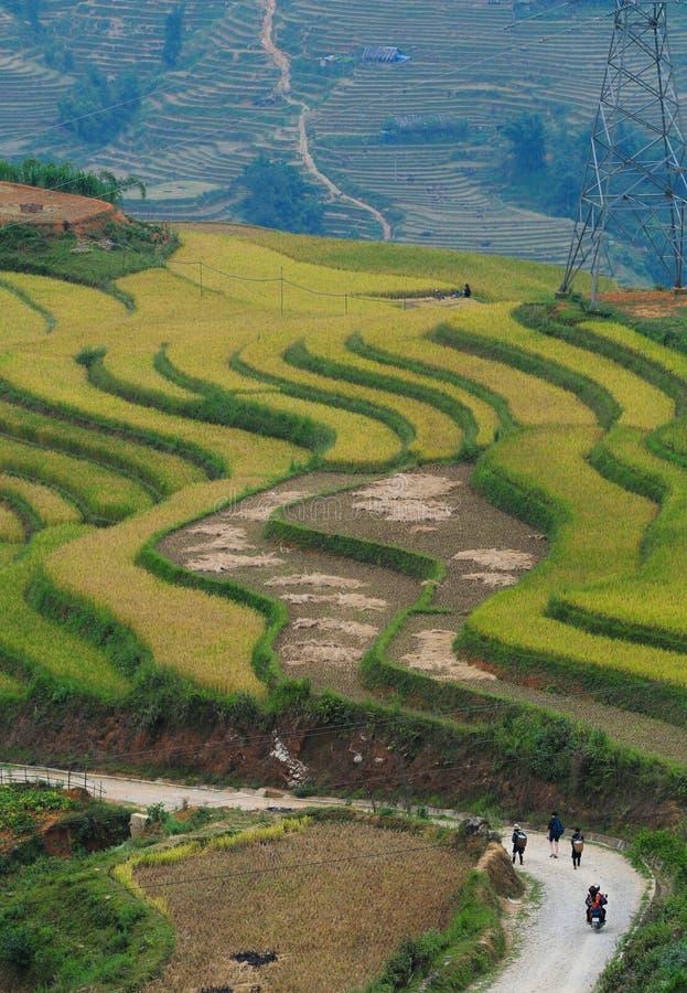 Terraced τομέας ρυζιού στο βόρειο Βιετνάμ στοκ φωτογραφία