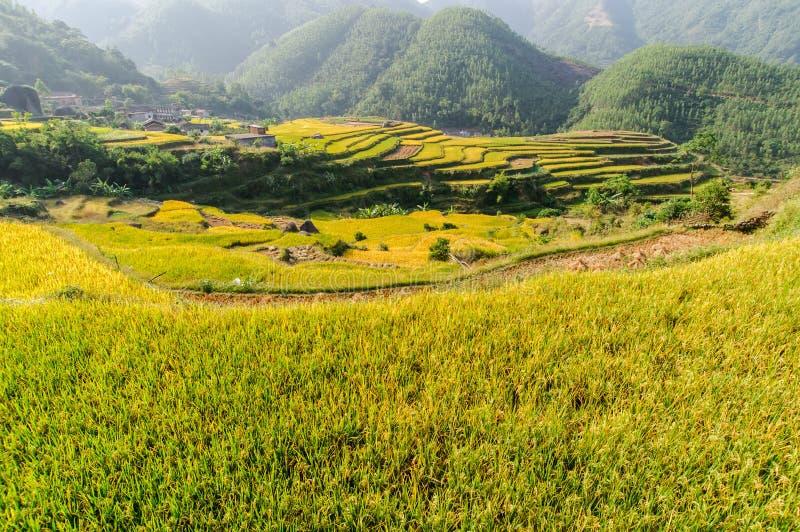 Terraced fields stock image