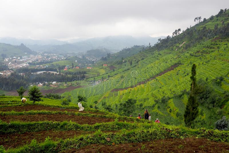 14 November 2018 - Kigali, Rwanda : Terraced landscape in Central Africa, hills of Rwanda stock images