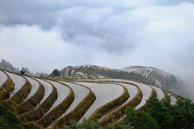 The terraced paddy fields in Guangxi Zhuang Autonomous Region in China. Hidden in the clouds royalty free stock photo