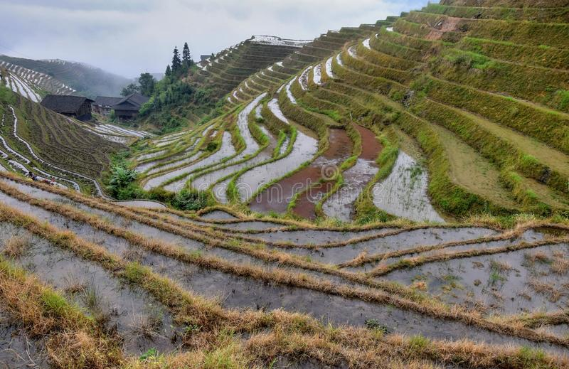 The terraced paddy fields in Guangxi Zhuang Autonomous Region in China. Hidden in the clouds royalty free stock photos