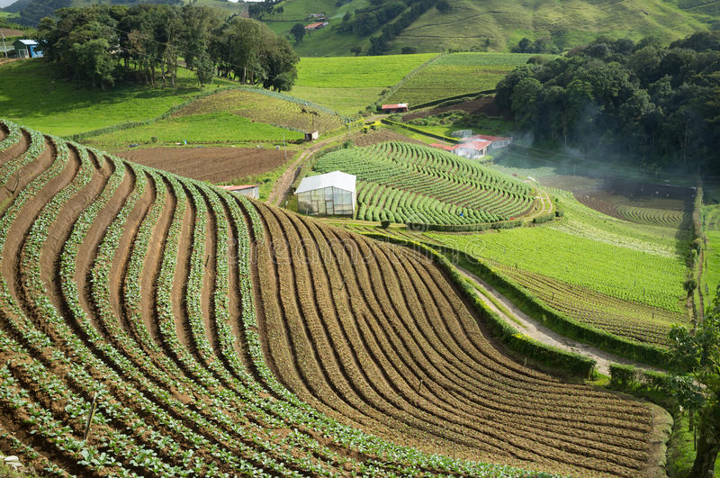 Agricultural terraces royalty free stock image