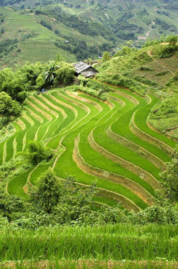 Download Terraced Rice Field stock image. Image of culture, rice - 20349373
