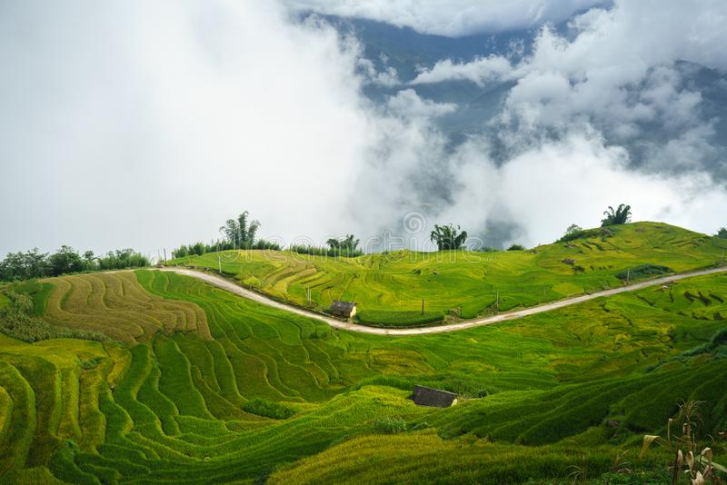 Terraced rice field landscape in harvesting season with low clouds in Y Ty, Bat Xat district, Lao Cai, north Vietnam.  royalty free stock image