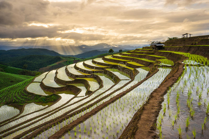 Terraced Rice Field in Mae Cham district. Chiangmai province,. Thailand royalty free stock photo