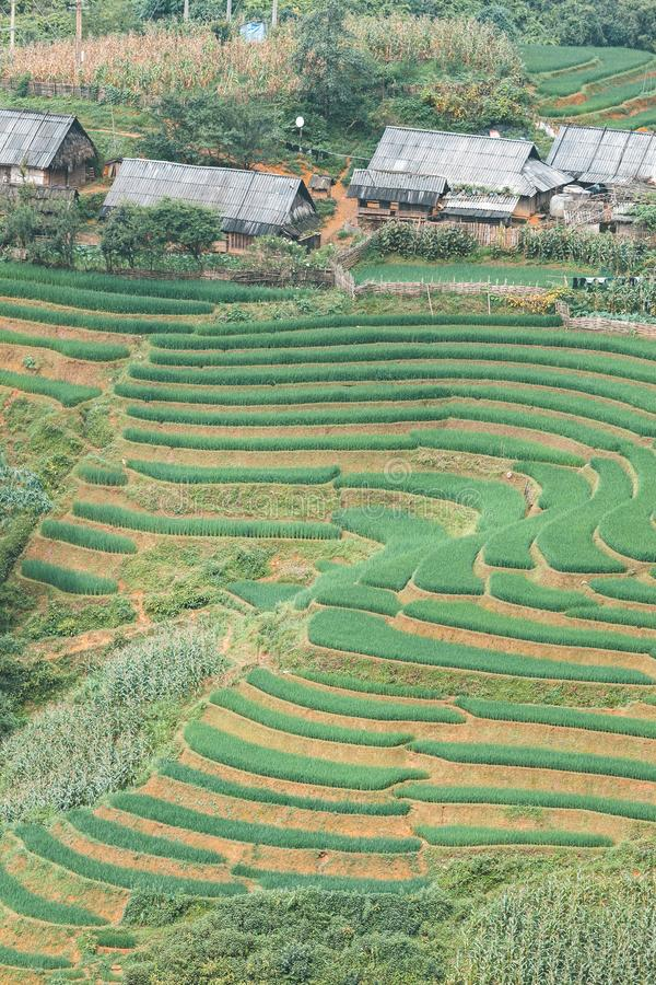 Rice field in Sapa, Vietnam stock photos