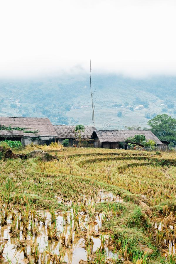 Terraced rice field and traditional house at Lao Chai, Sapa, Vietnam stock photos