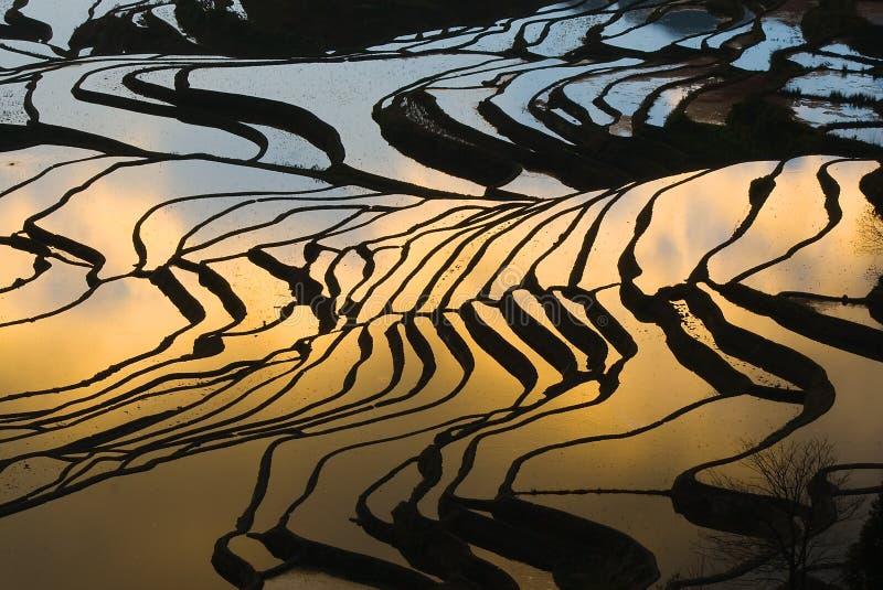 Terraced rice field (Yuanyang Hani ) stock photos
