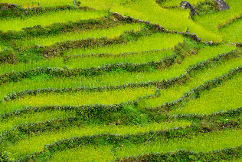 Terraced rice fields. Himalayas, Nepal stock images
