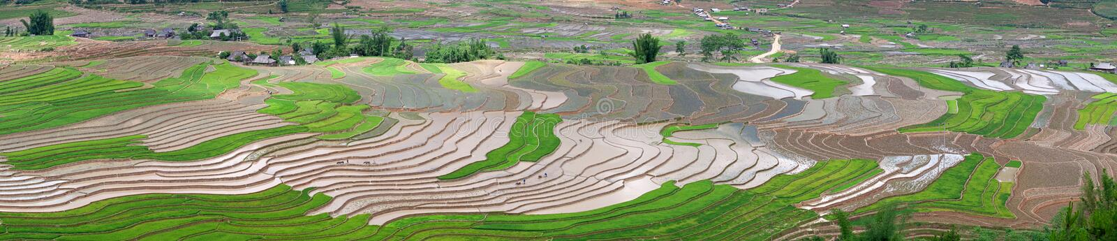 Terraced rice fields in Vietnam stock photography