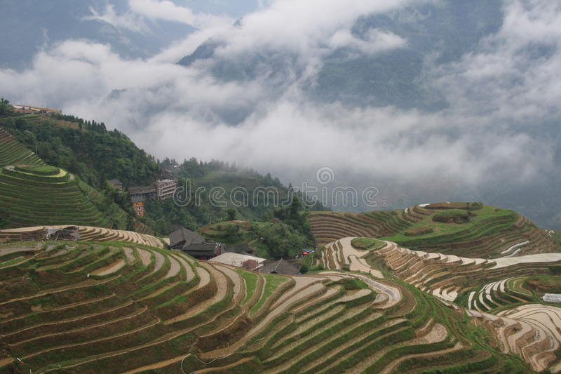 Terraced rice fields stock images