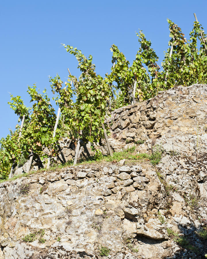 Download Terraced Vineyard Of Ampuis Royalty Free Stock Photos - Image: 25439878