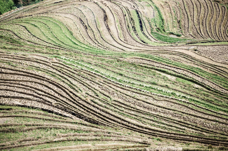 Download Terraces lines stock photo. Image of asia, lines, hill - 24895036