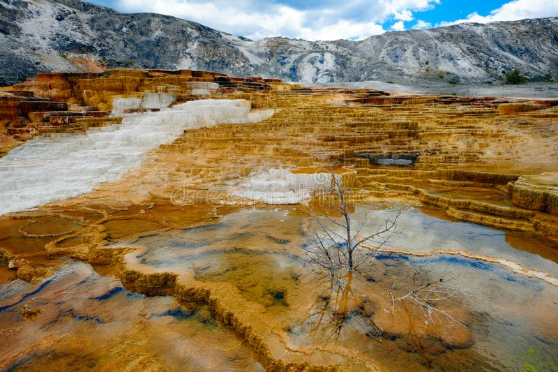 Terraces at Mammoth Hot Spring, Yellowstone National Park royalty free stock image