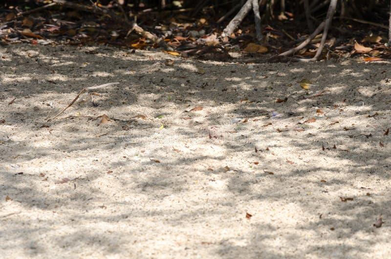 Terrain arénacé aride en île d'Aruba photo libre de droits