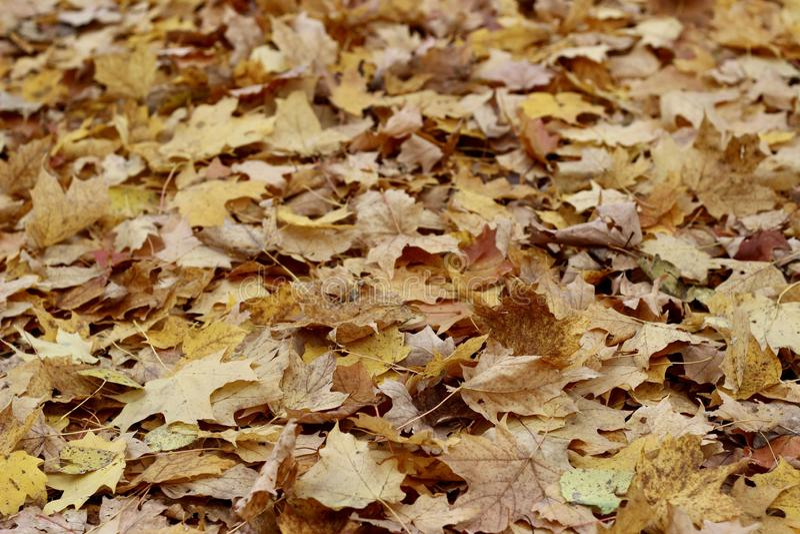 Terrain couvert de feuilles d'automne image libre de droits