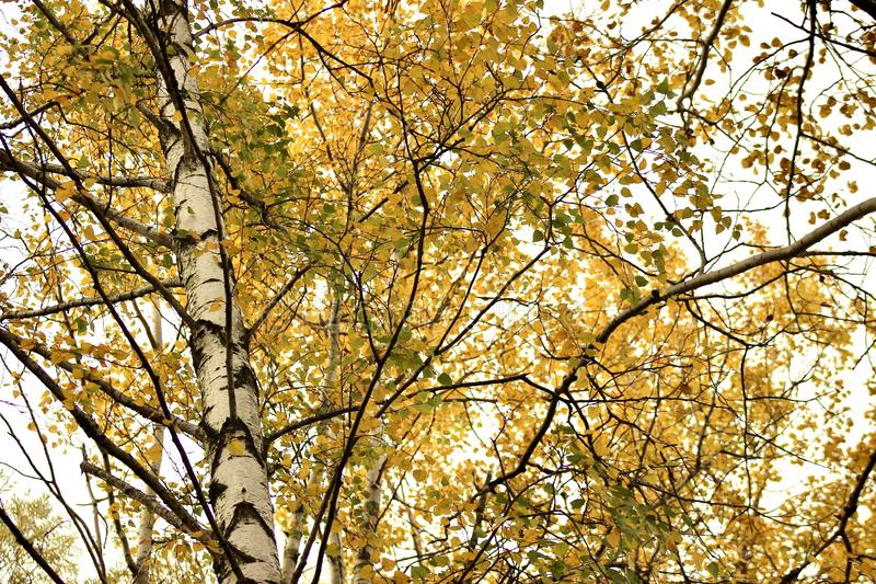 Terrain couvert de feuilles d'automne photo stock