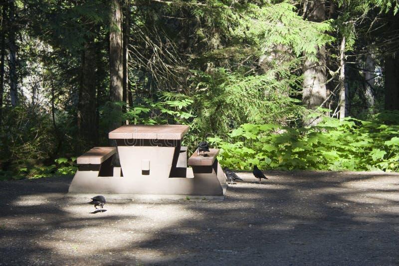 Terrain de camping avec la table et les oiseaux de pique-nique photographie stock