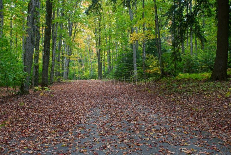 Terrain de camping de lac du ` s de Peter, réserve forestière de Hiawatha, Michigan, Etats-Unis image stock