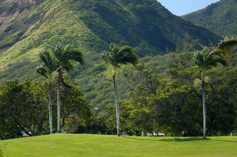 Terrain de golf d'Hawaï image libre de droits