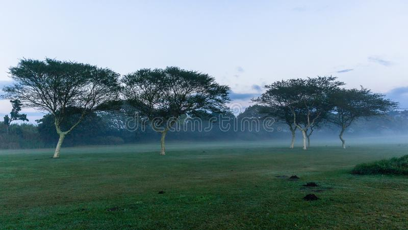 Terrain de golf Dawn Mist Trees Landscape image stock