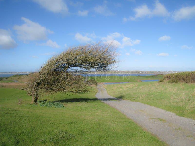 Terrain de golf soufflé par vent photographie stock