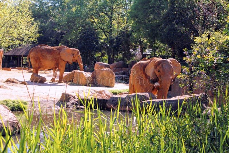 Terrain de jeu d'éléphant images libres de droits
