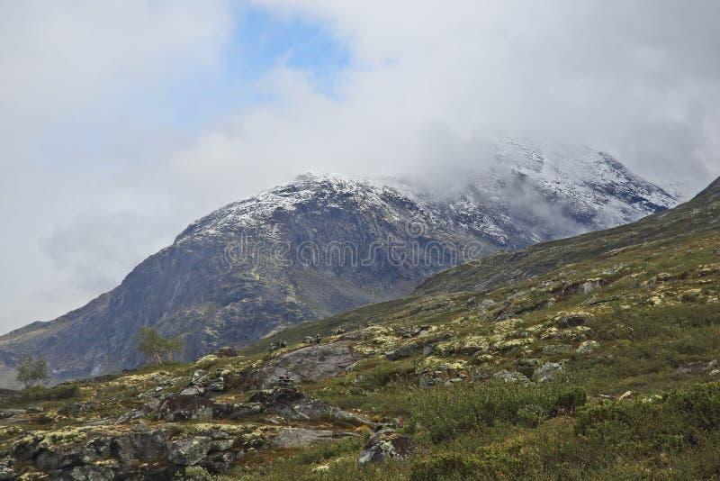 Terrain montagneux en Norvège Stationnement national de Jotunheimen images libres de droits